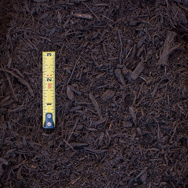 Living Mulch